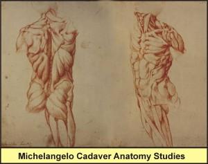 Michelangelo Cadaver Anatomy Studies